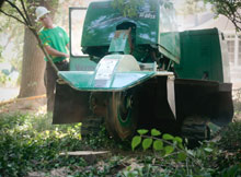 Greenhaven Tree Care Services - Stump Removal