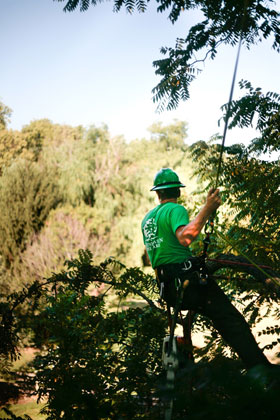 Greenhaven Tree Care Services